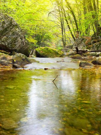 Foto de Lake in the forest - Imagen libre de derechos