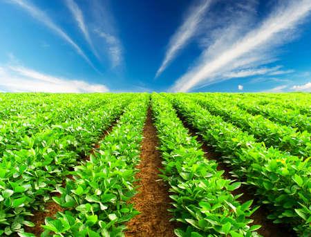Foto für Green rows on the field - Lizenzfreies Bild