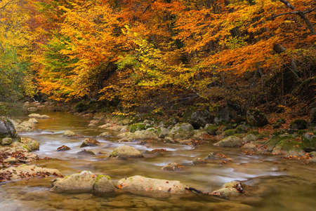 Photo for Road in autumn forest. Autumn landscape - Royalty Free Image