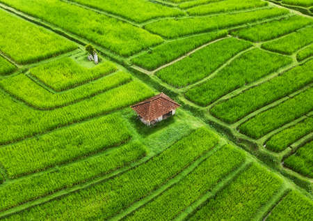 Photo pour Aerial view of rice terraces. Landscape with drone. Agricultural landscape from the air. Rice terraces in the summer. - Jatiluwih rise terrace, Bali, Indonesia. Travel - image - image libre de droit