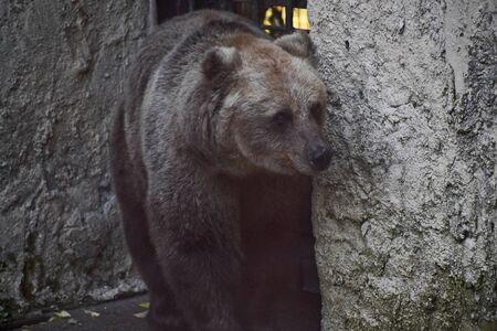 Foto de brown bear in the cave - Imagen libre de derechos