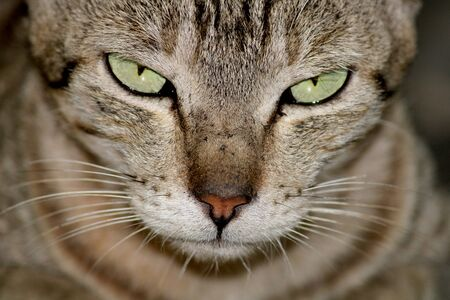 A close-up view of a beautiful cat.