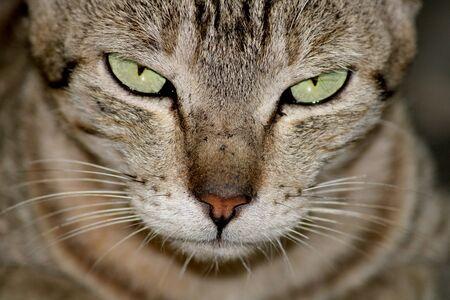 Photo pour A close-up view of a beautiful cat. - image libre de droit