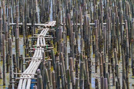 Binturongwl27200300081