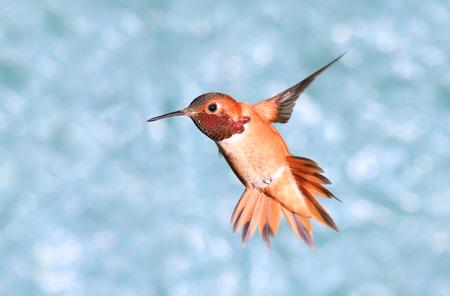 Birdiegal180300027