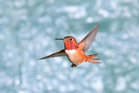 Birdiegal180300028