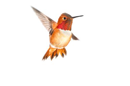 Birdiegal180300029