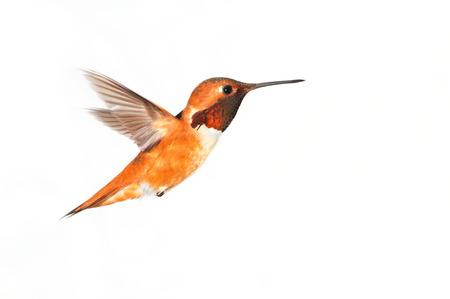 Birdiegal180300030