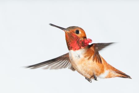 Birdiegal180300031