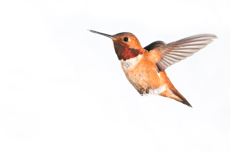 Birdiegal180300032