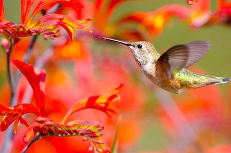 Birdiegal180300122