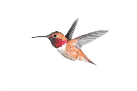 Birdiegal180300126