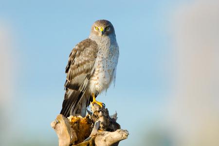 Birdiegal180300324
