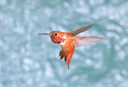Birdiegal180300341