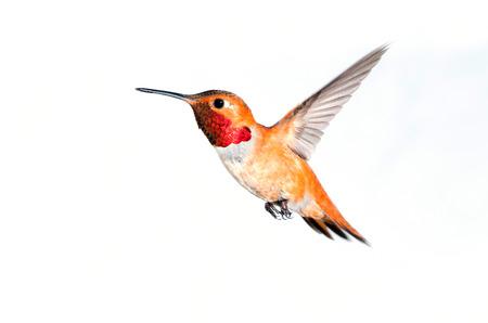 Birdiegal180300342