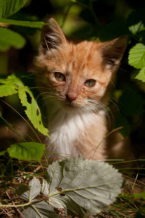 Small kitten between the leaves