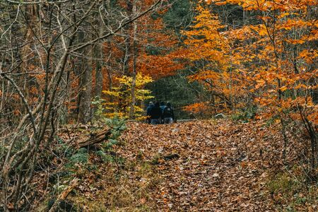 Photo for A Group of Men Far off on a Forest Trail - Royalty Free Image