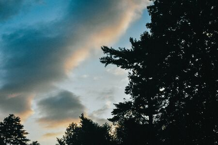 Photo for A Shot of the Sky in the Background and a Silhouette of Trees in the Foreground - Royalty Free Image