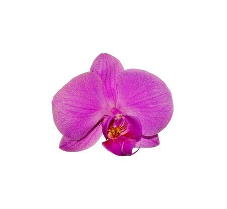 Foto für Beautiful purple orchid isolated on a white background - Lizenzfreies Bild