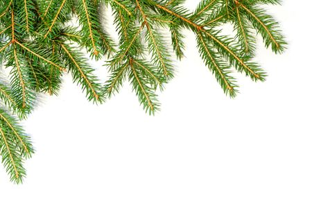 Fresh green fir branches isolated on white background