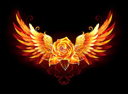 Blossoming fire rose with phoenix wings on black background.