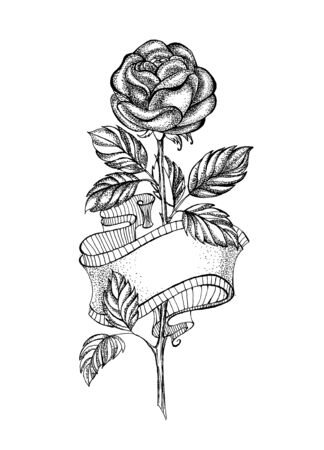 Illustration for Sloppy, pencil drawing of straight rose with flexible ribbon on white background. - Royalty Free Image