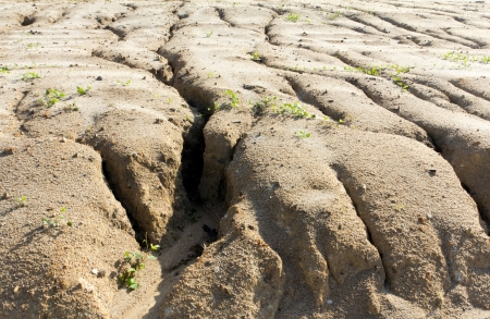 Soil erosion to overgrazing leading to desertification caused by over exploitation