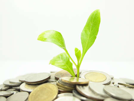 Money concept and  plant