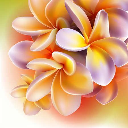 Illustration for Frangipani flowers - Royalty Free Image