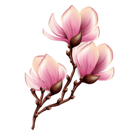 Illustration for Magnolia branch isolated - Royalty Free Image
