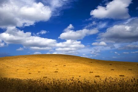 field of wheat on the hill