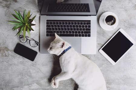 Photo pour cat pet sleeping on work desk - image libre de droit
