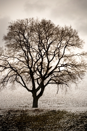 a bare tree in winter on a gloomy day