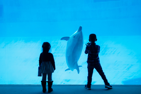 Photo pour Silhouette girl enjoy watching and boy taking photo of dolphins in aquarium. Kids or Children fun activity. - image libre de droit
