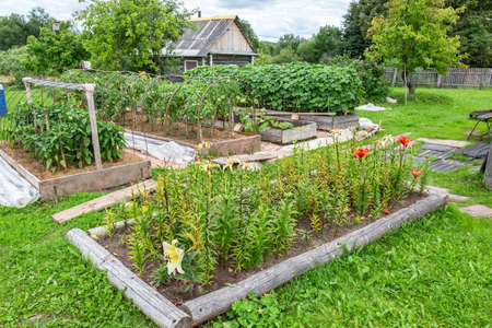 Photo for Flowers and vegetables grows at the vegetable garden in summertime - Royalty Free Image