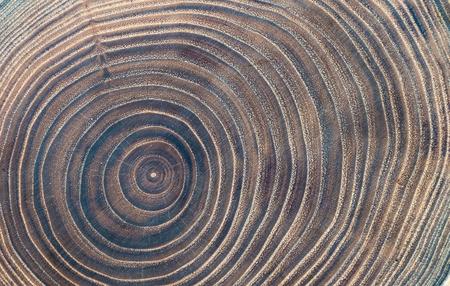 Photo pour Close-up wooden cut texture - image libre de droit