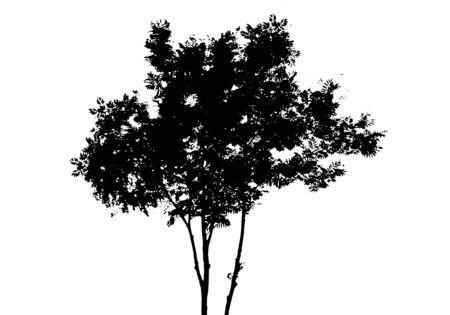 Foto für Black tree silhouette. Isolated on white background. Vector nature illustration for your design - Lizenzfreies Bild