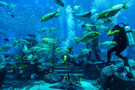 Photo pour DUBAI, UAE - DECEMBER 5: Large aquarium in Hotel Atlantis in Dubai, UAE. December 5, 2015 in Dubai, United Arab Emirates - image libre de droit