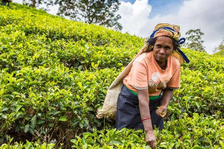 Foto für NUWARA ELIYA, SRI LANKA - FEBRUARY 15, 2020: Woman tea picker in tea plantation in Nuwara Eliya, Sri Lanka - Lizenzfreies Bild