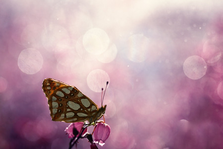 Photo pour The colorful world of a butterfly on a nice background - image libre de droit