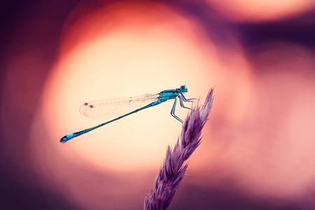Photo pour Dragonfly Hunter other insects - image libre de droit