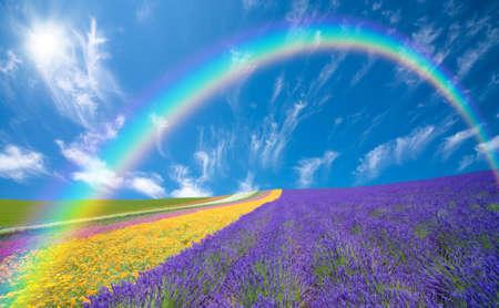 Photo pour Flower field and blue sky with clouds. - image libre de droit