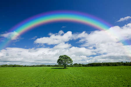 Foto de Beautiful colourful rainbow over an empty green field with a single line of trees on the skyline. - Imagen libre de derechos