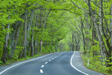 Green Forest Road
