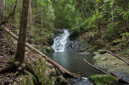 Waterfall and Pond in an Australian subtropical rainforest