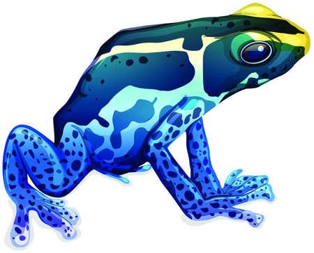 Illustration of a poison dart frog (Dendrobates tinctorius)