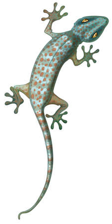 Illustration of the tokay gecko
