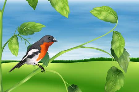 Illustration showing the bird