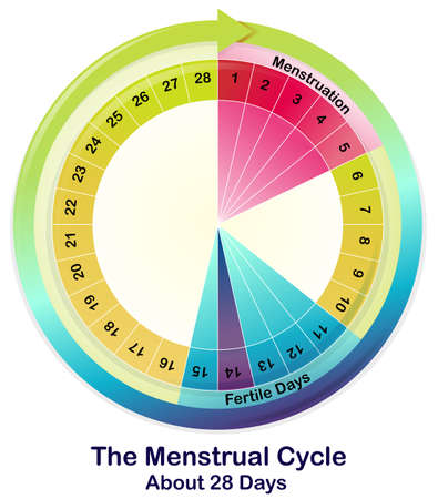 Illustration of the Menstrual Cycle on a white background