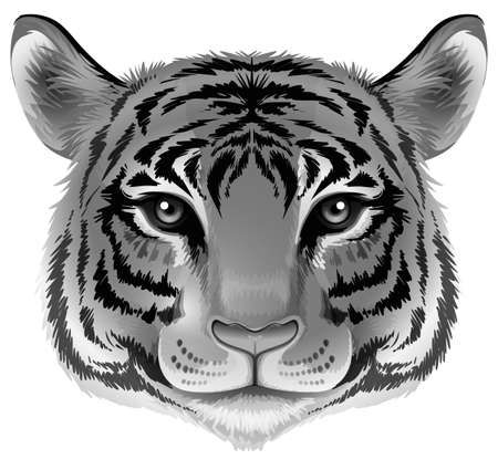 Illustration of a head of a tiger in grey color on a white background